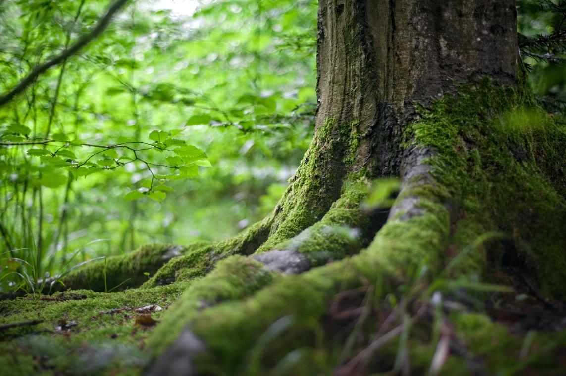一个树的树会使它产生自我平衡,然后向自己保证